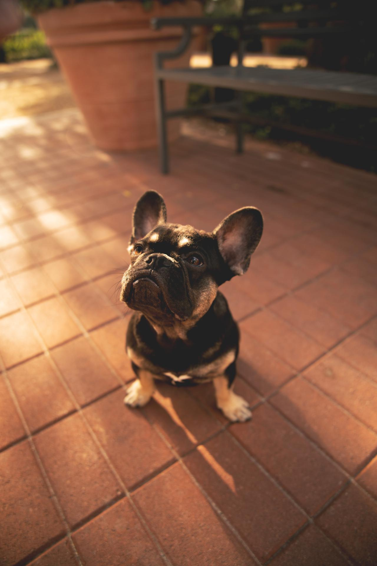 Prepare your home for a new puppy with these tips from Royal Empire French Bulldogs.