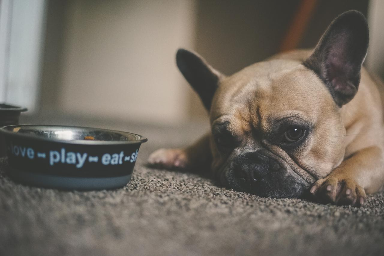 What and how much should a French bulldog puppy eat?