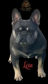 Image of Leia a lady with a Frenchie breeder that ships nationally.
