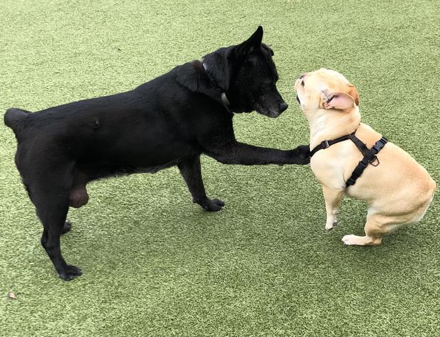 TAKA Dog Walk