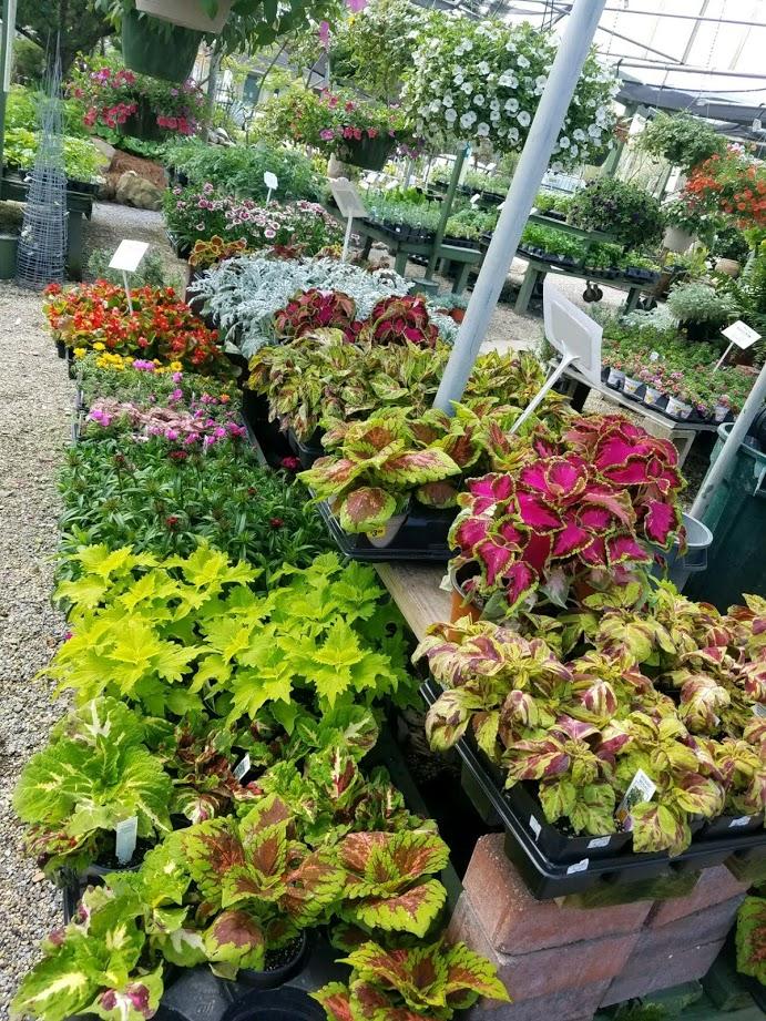 portfolio/Spring 2018 Garden Center 3.jpeg
