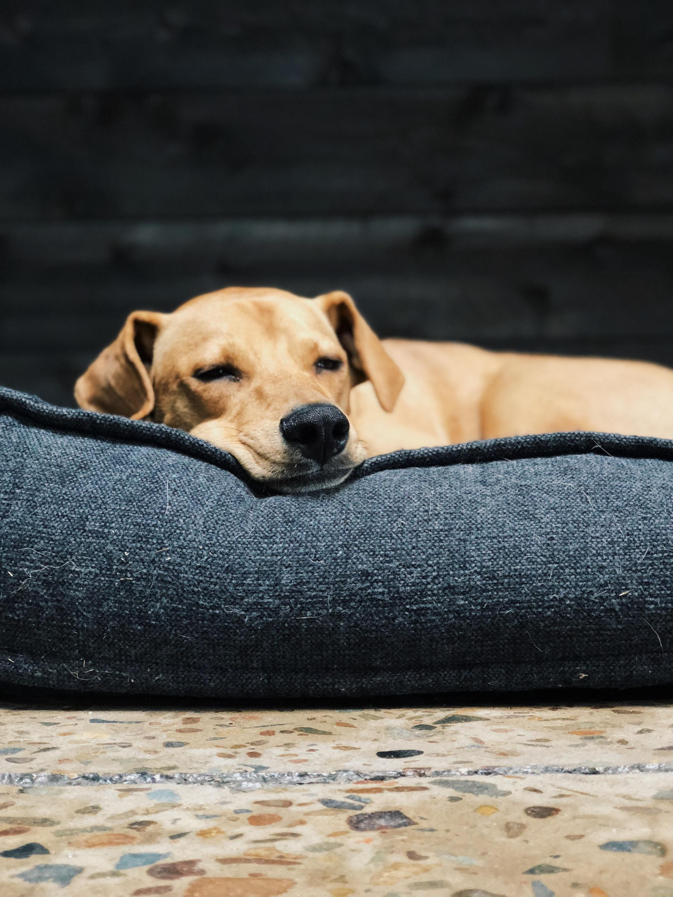 a dog lying down comfortably on a cushioned dog bed