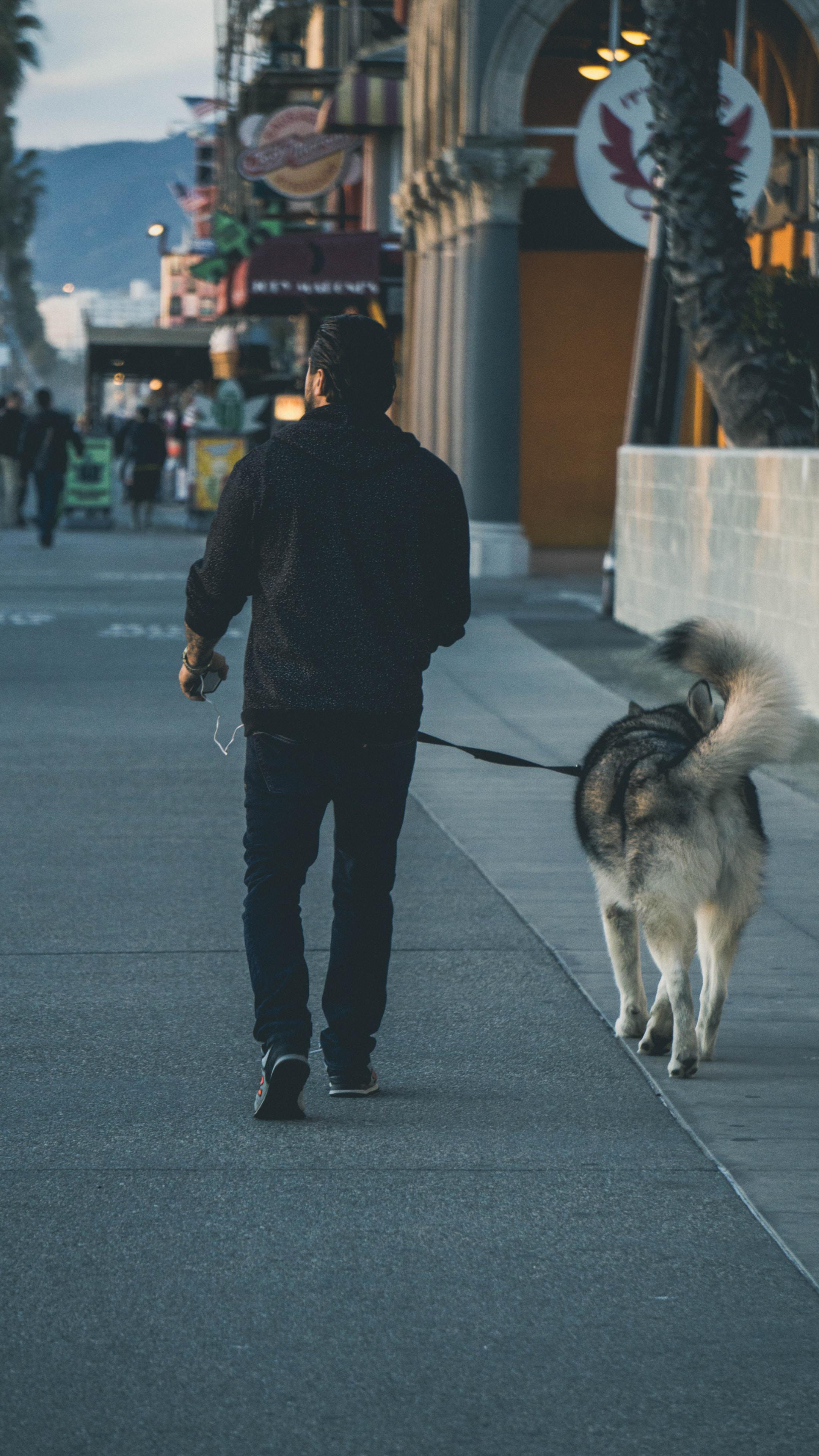 Vancouver dog walkers.