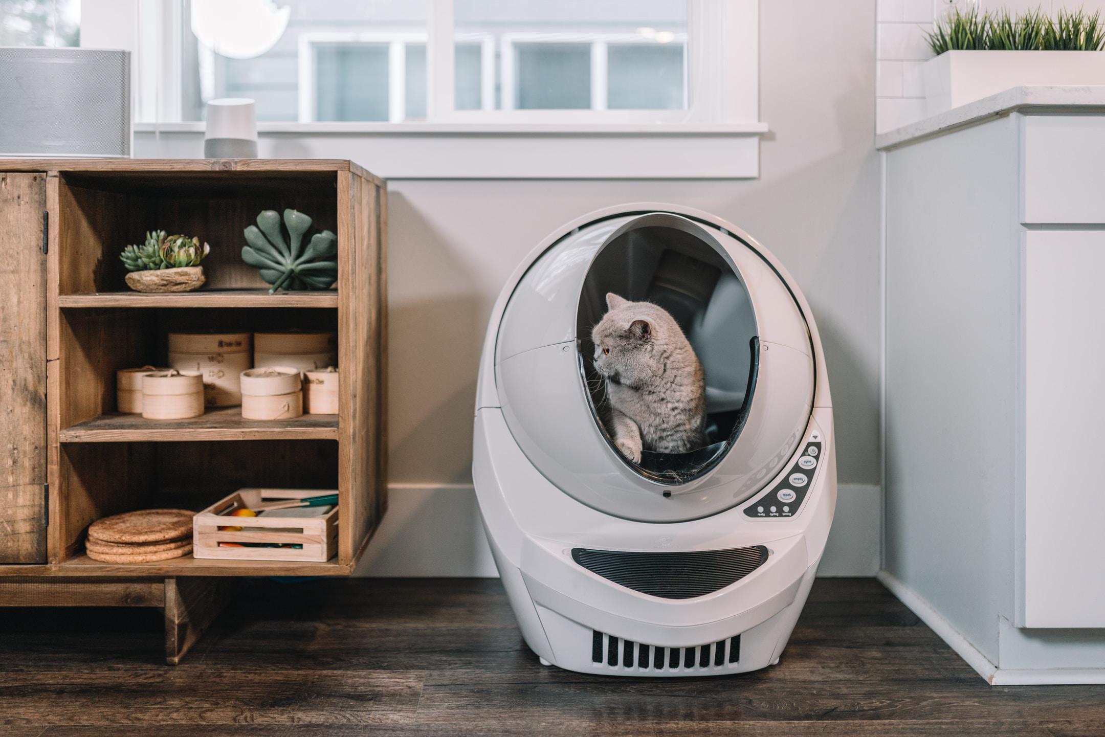 Grey Cat using Beige Litter-Robot.