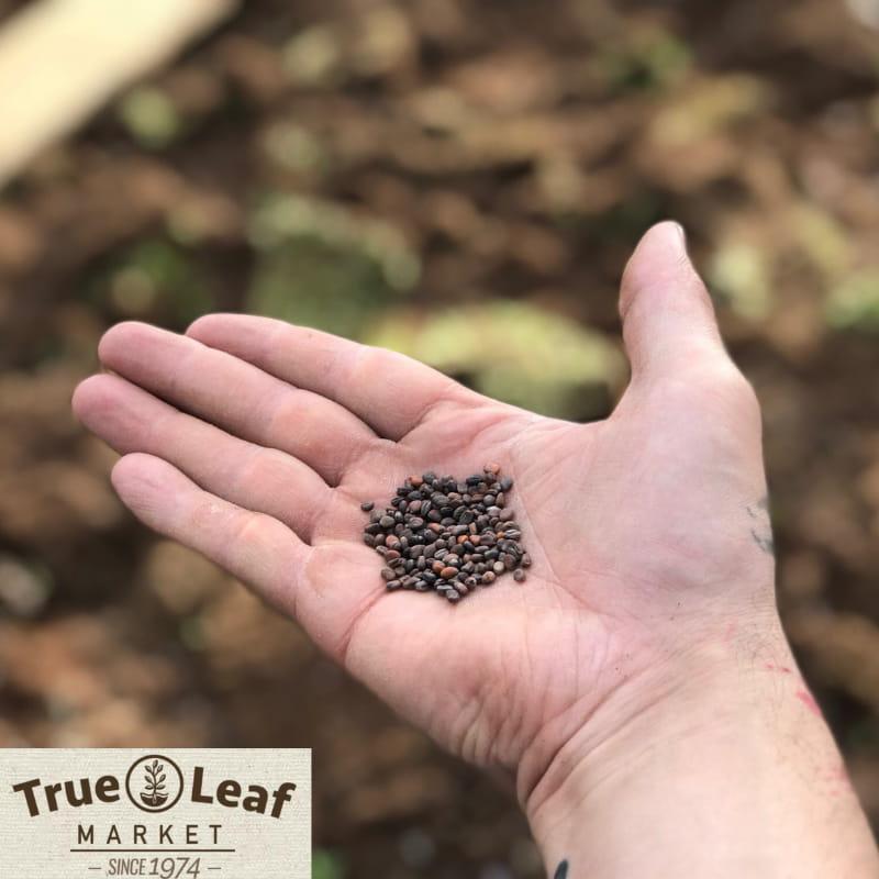 Buy Seeds from True Leaf Market