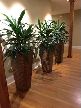 bd36c640-ebb4-11ea-b444-0242ac110002-website_photo_1_interior_plantscaping.png