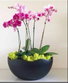 b9800d18-ebb4-11ea-8ead-0242ac110002-website_photos_12_colorful_plant_rotations_section.png