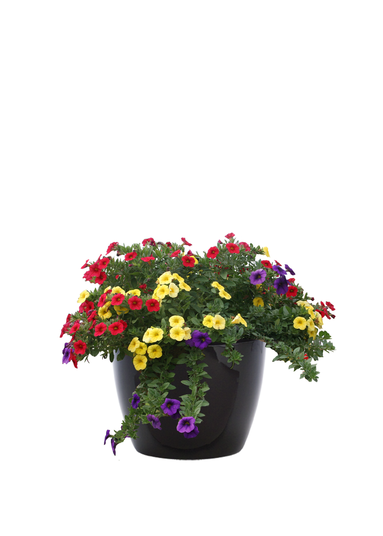 outdoorcontainermix2.png