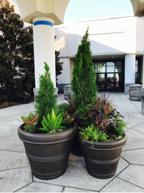 b8856ffc-ebb4-11ea-adc6-0242ac110003-website_photo_16_exterior_container_gardens_section.png