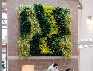 bb825cce-ebb4-11ea-898a-0242ac110003-website_photo_6_green_wall_systems_section.png