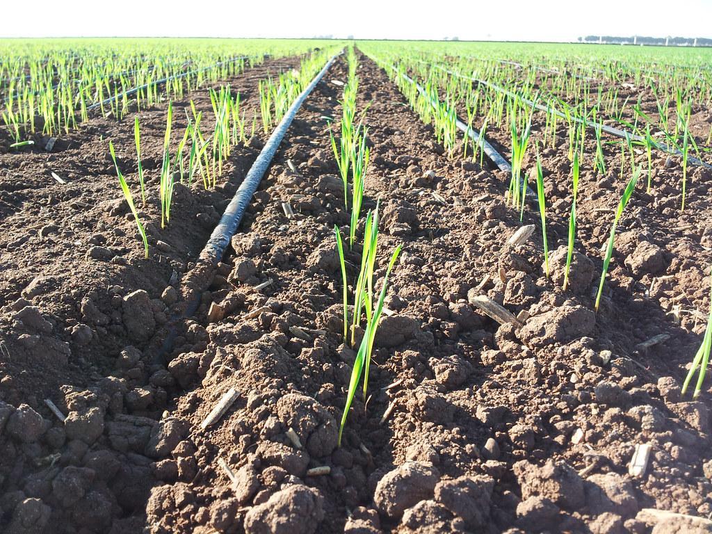 drip irrigation 2.jpg