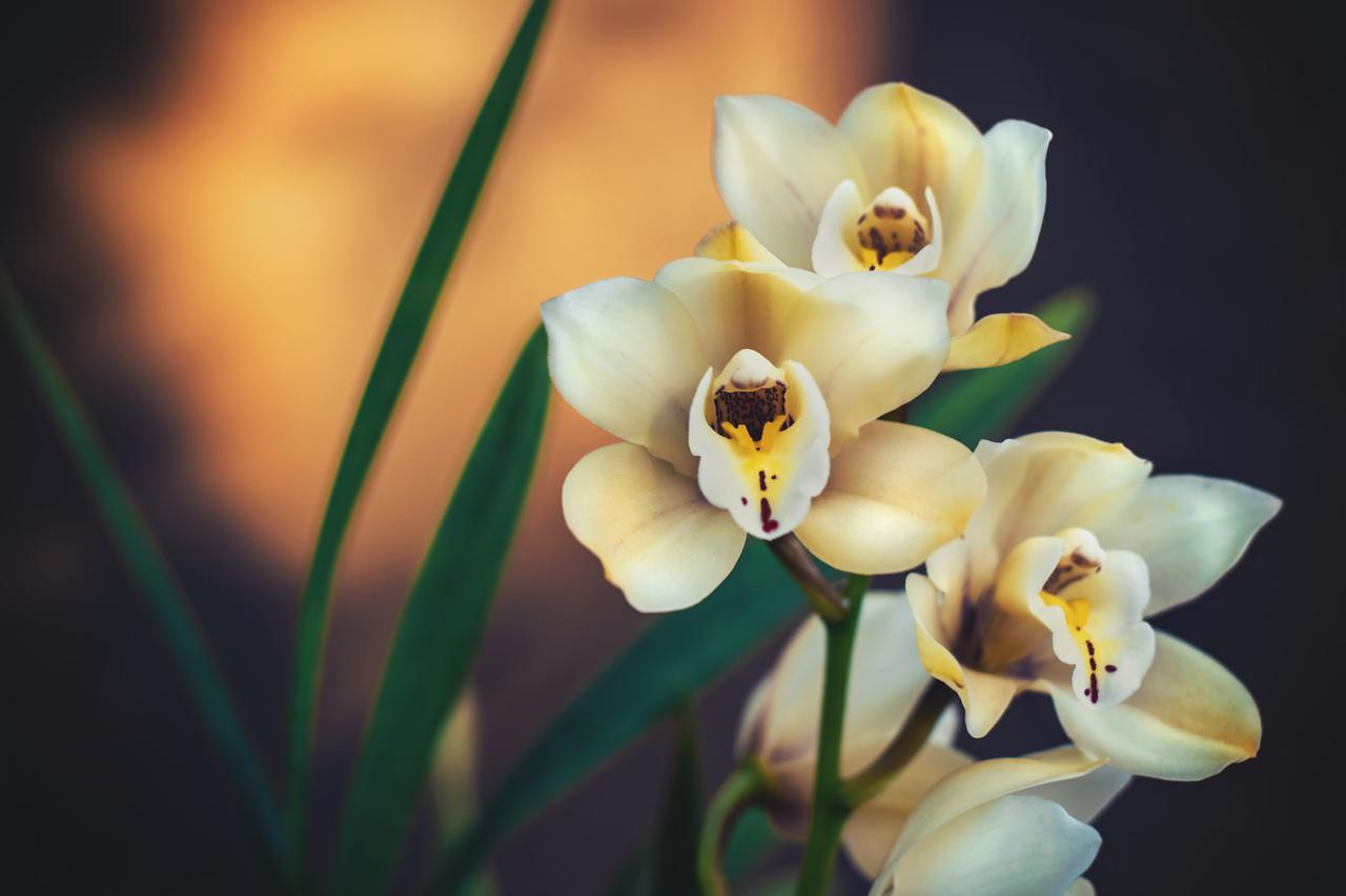 Orchid Sunlight