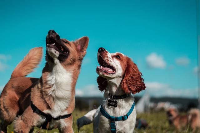 An image of dogs who enjoy having a dog poop cleaning service pick up their messes in the yard.