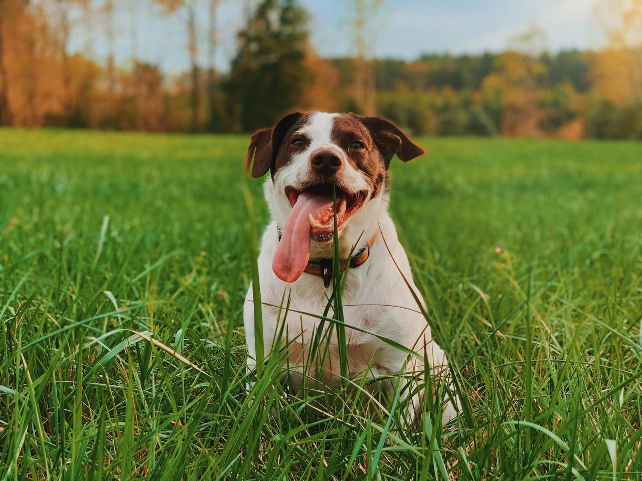 Tips from a dog poop yard cleaning service to keep your yard in great shape