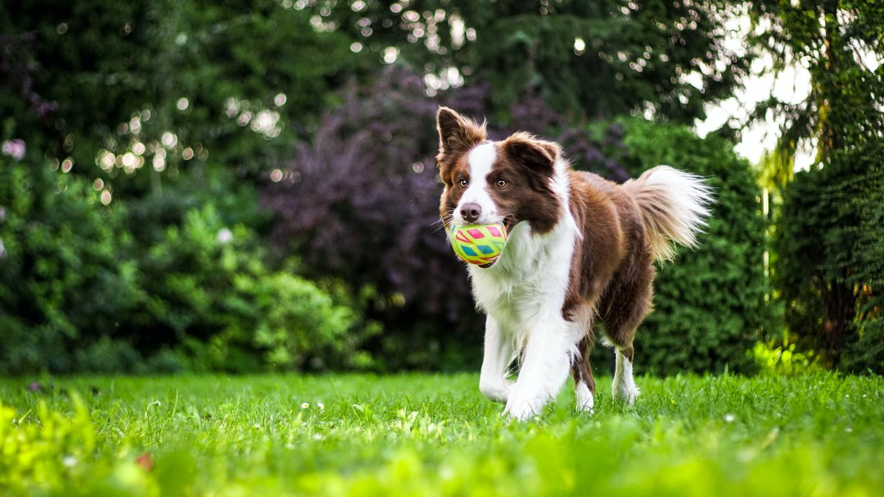 Reasons Why You Need a Dog Waste Removal Service