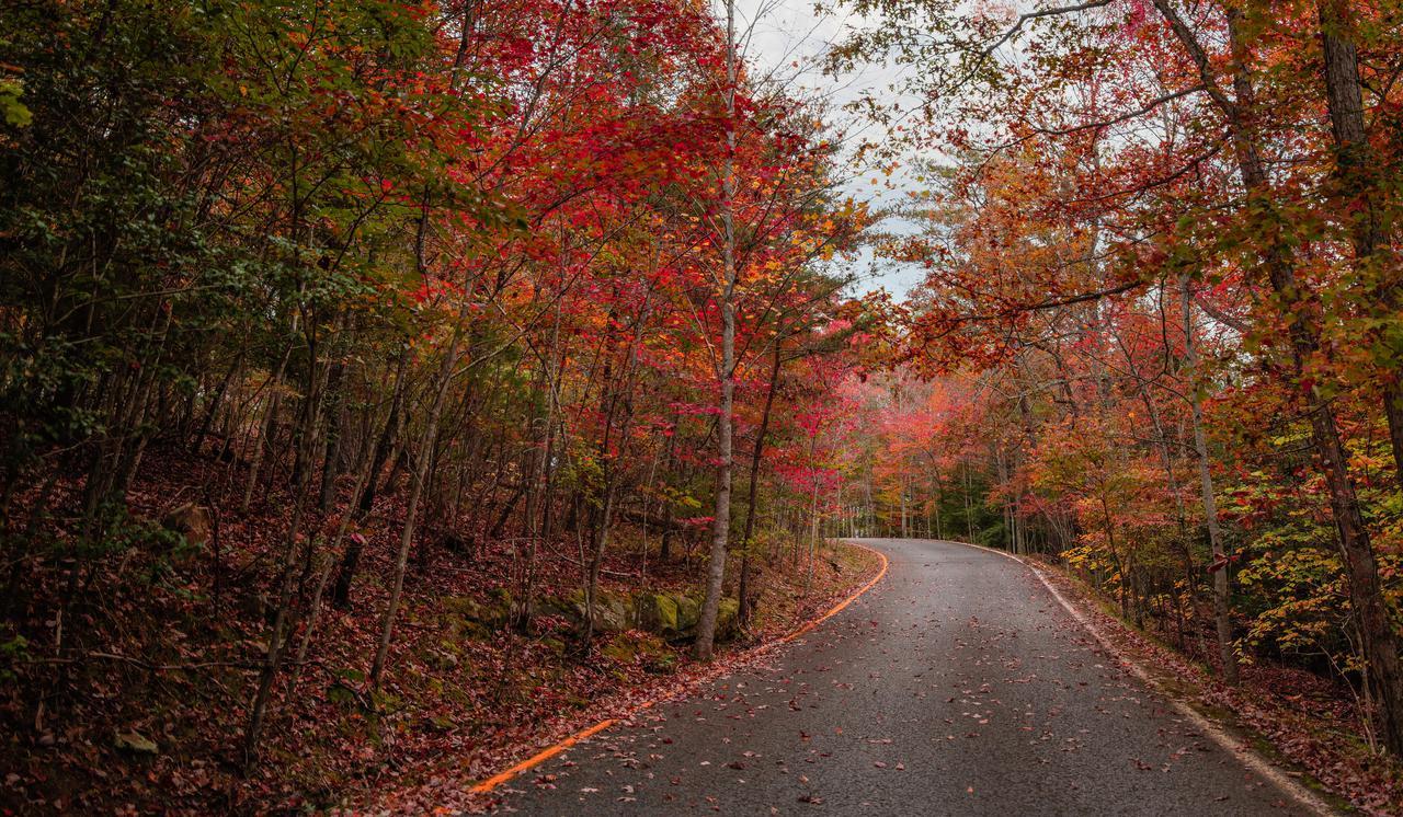 road-thru-fall-colors.jpg