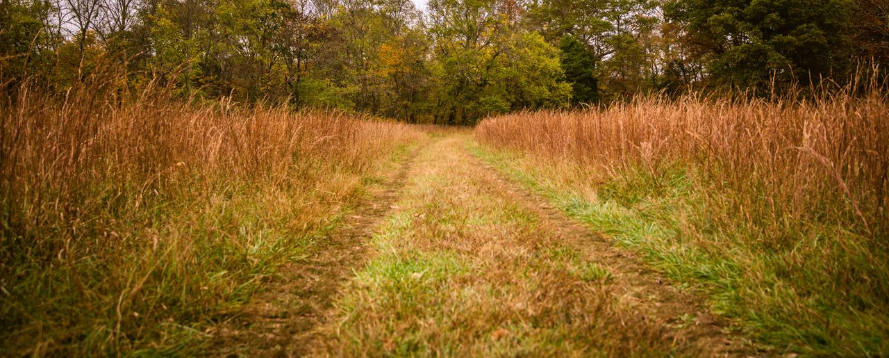 path-through-weeds.jpg