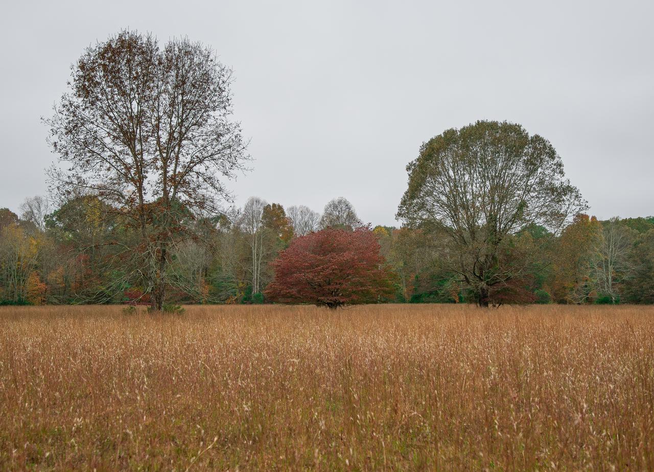 wide-open-field.jpg