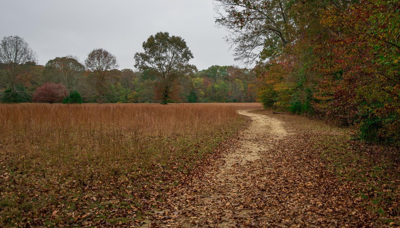 winding-path-fall-colors.jpg