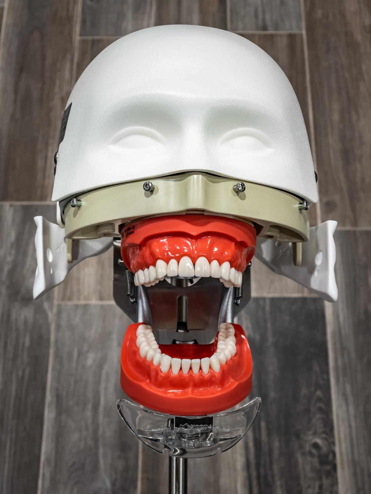 Dentist training tool.
