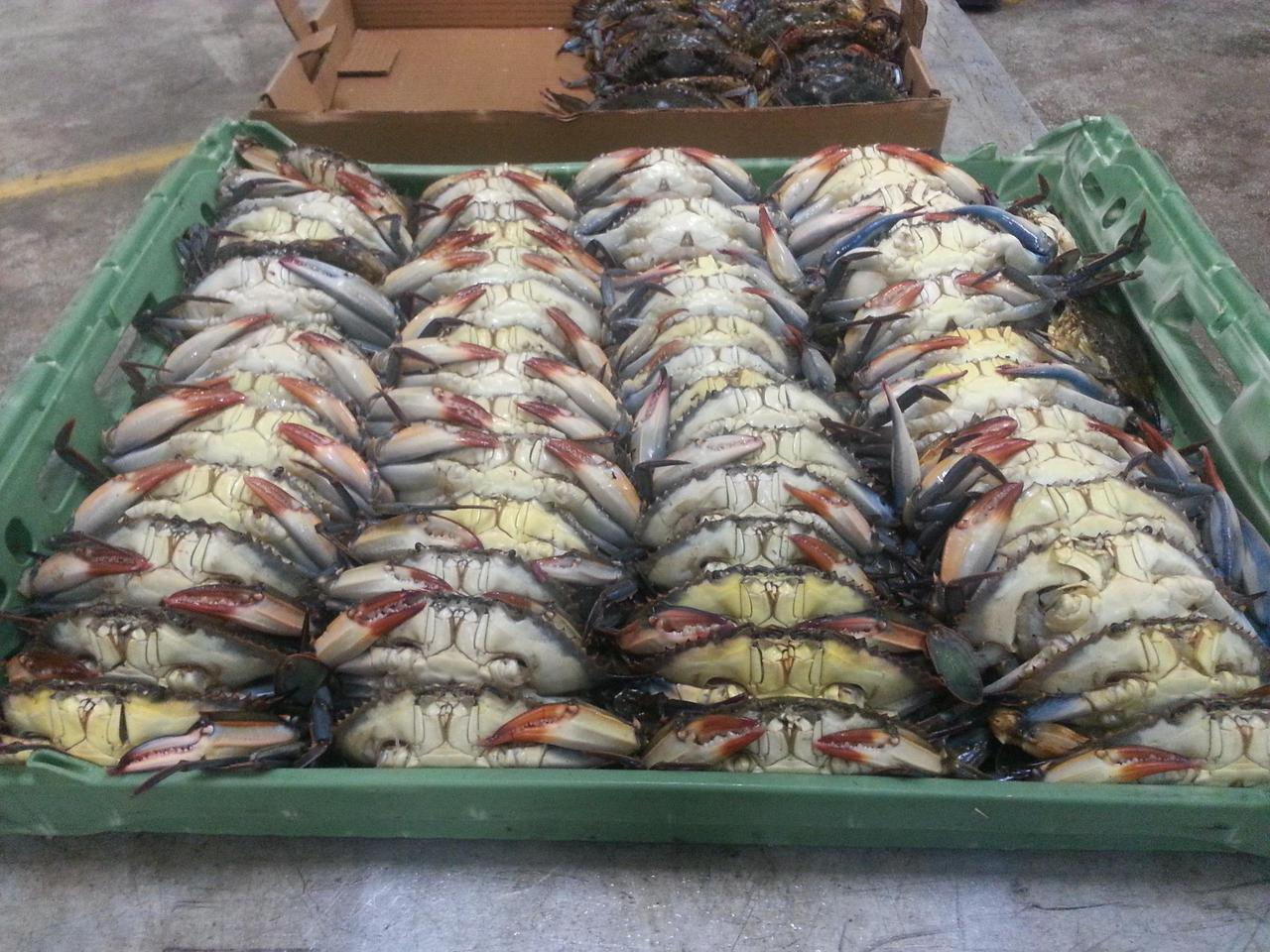Live Soft Crabs just finished shedding