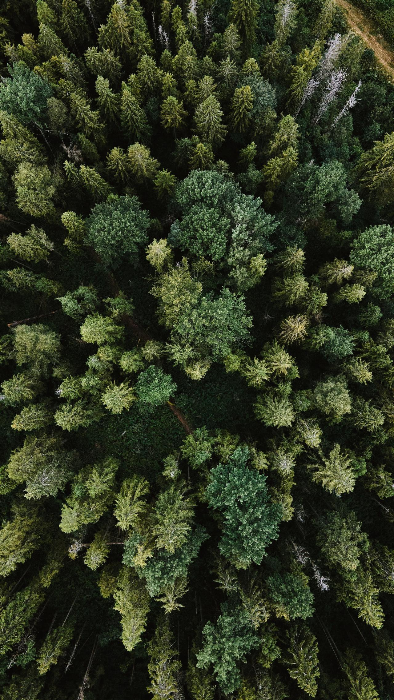 aerial view of a forest, drone shot