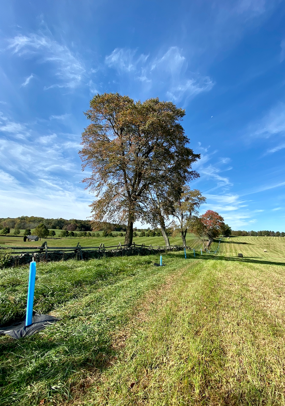 a large tree in a field