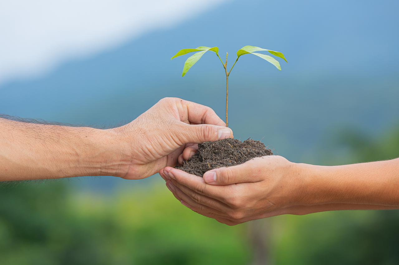 close up picture of a hand passing a sapling plant to another hand