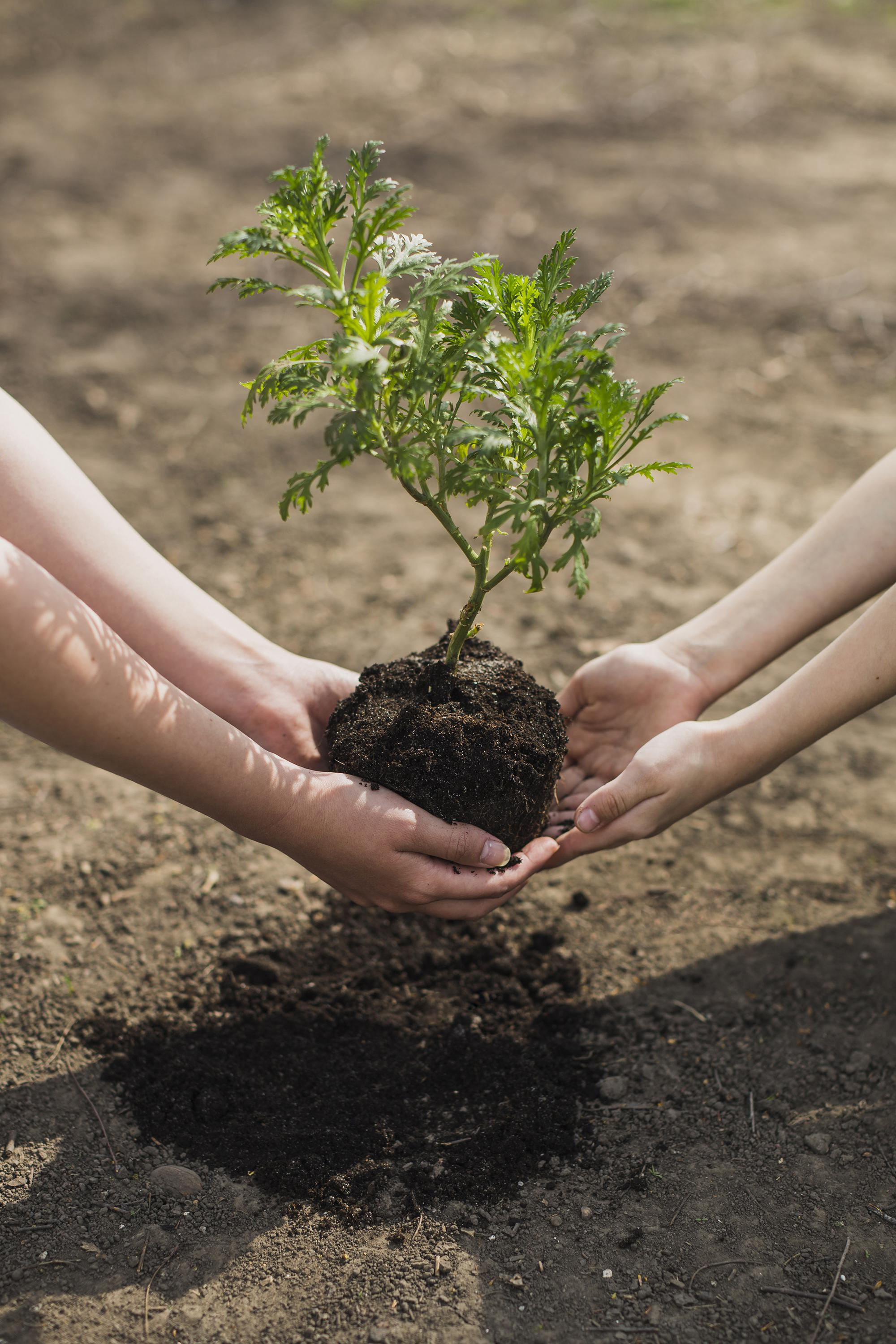 two sets of hands planting a tree