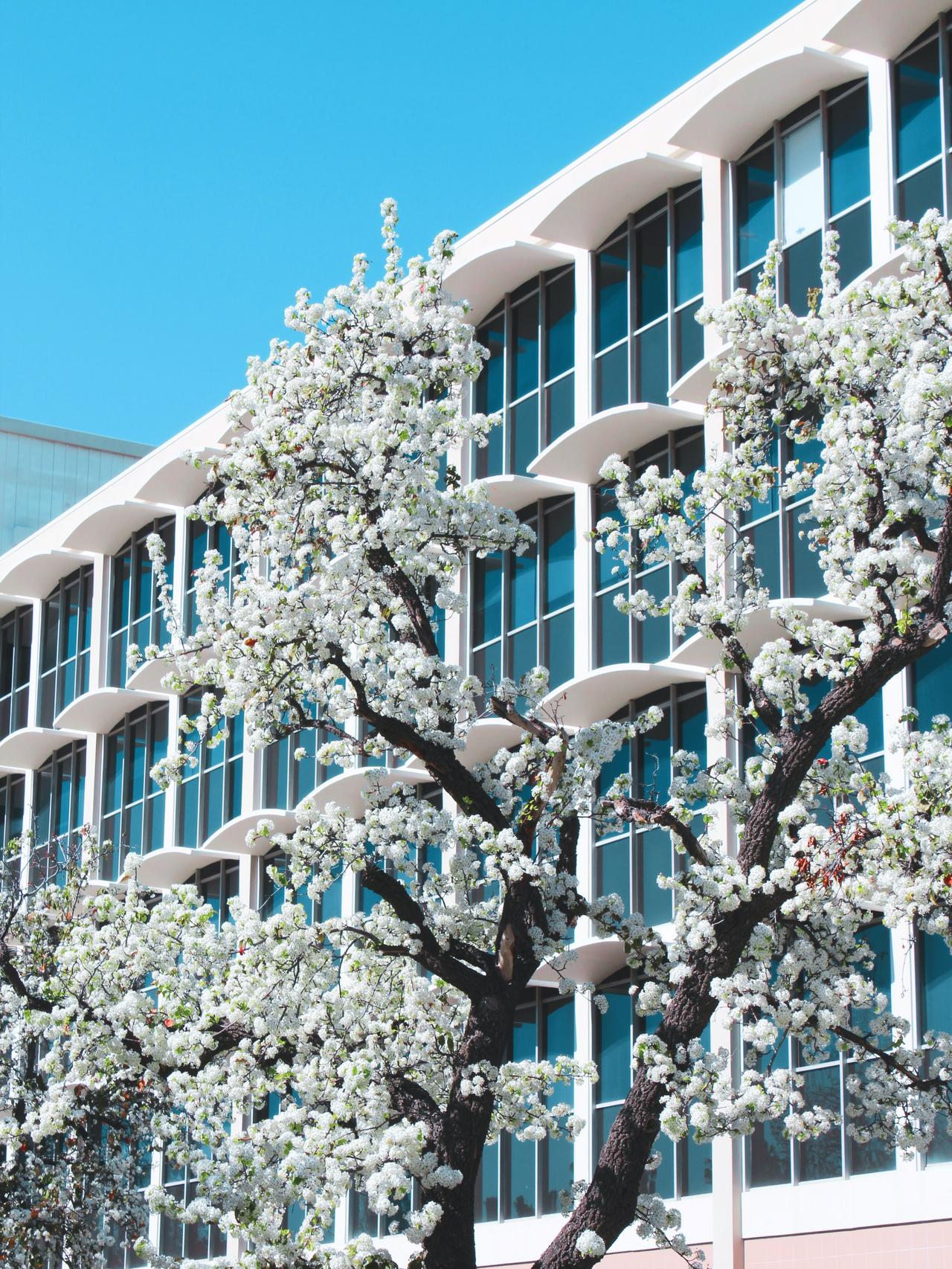 Stay in luxury apartments near UCLA as a dorm alternative