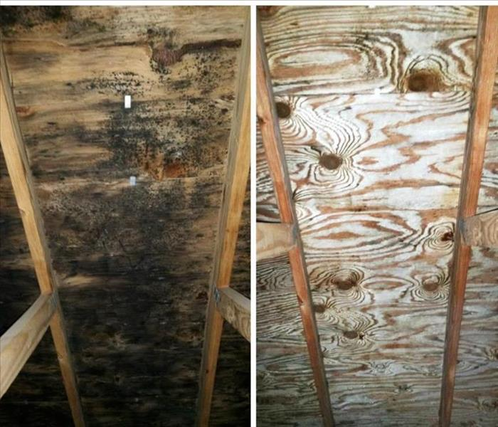 residential mold remediation | Disinfect-It