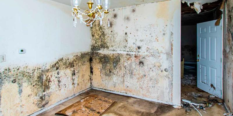 mold remediation Annapolis | disinfect-it.jpeg