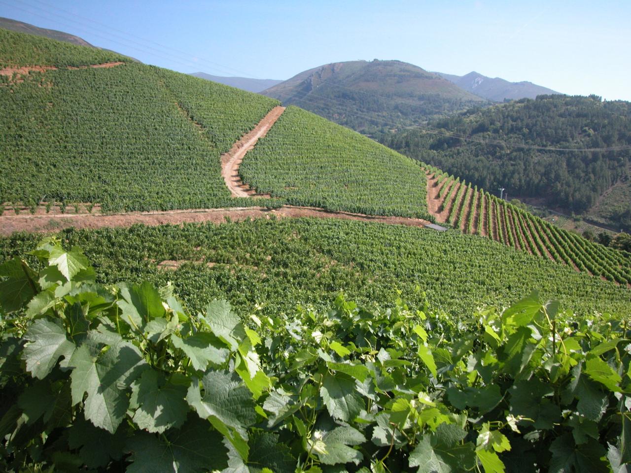 website-review-images/Vineyard slope.png
