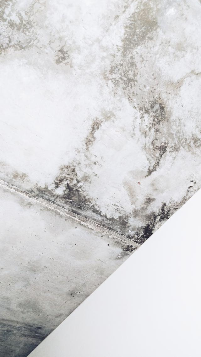 This is a picture of mold found during a mold inspection in Baltimore.
