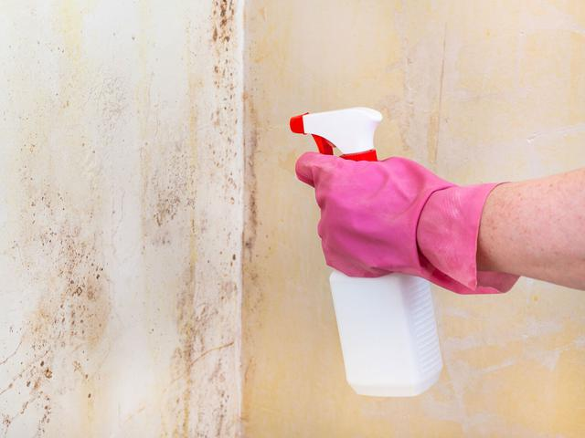 killing-of-mold-on-room-wall-with-chemical-spray-p44rqv8.jpg