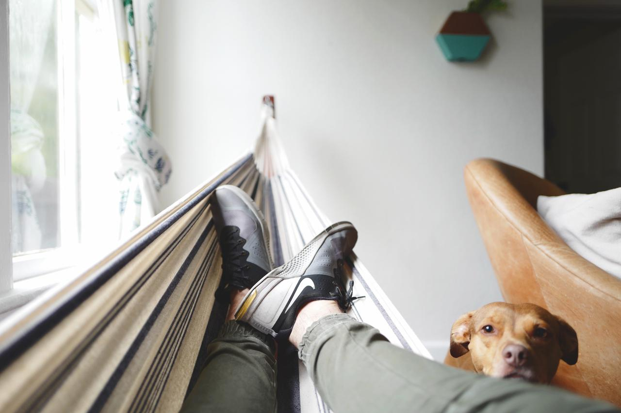 brown pit bull dog leaning head on mans legs