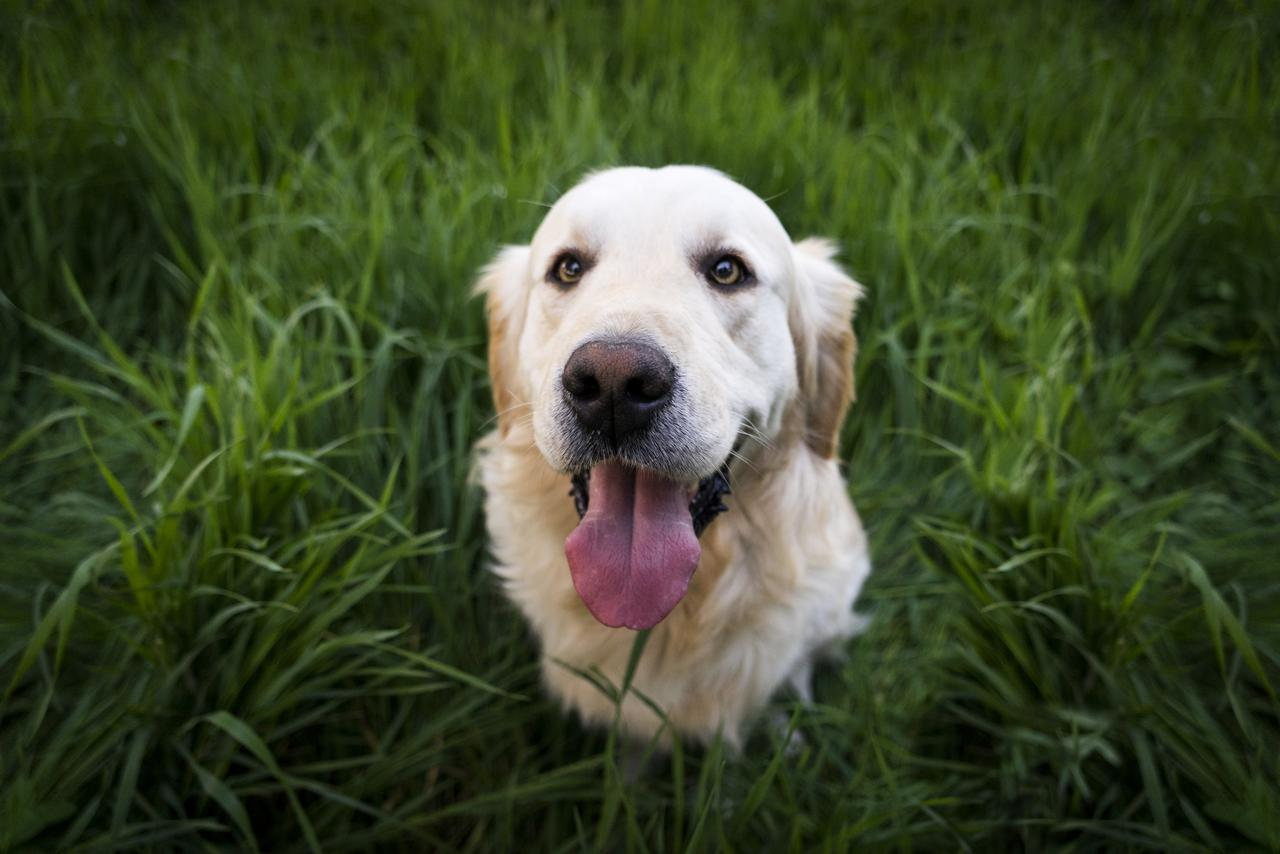 Dog Training | Behavior Modification
